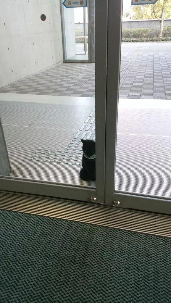 爆红ins,这只猫逃票失败,竟让一间美术馆成了日本的「吸猫圣地」!